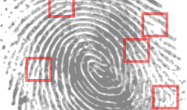 Fingerprint via https://pixabay.com/en/fingerprint-detective-criminal-146242/